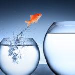 transformation, fish